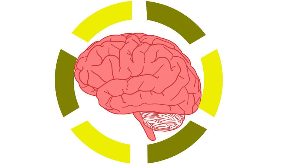 How Has Neuroscience Become a Hot Topic in the Education System?